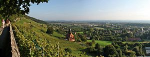 Pillnitz - Vineyard in Pillnitz with Church of the Holy Spirit