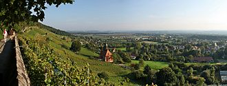 Pillnitz - Vineyard in Pillnitz with Church of the Holy Spirit
