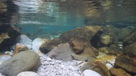 Датотека:Piva river underwater. Bottom covered in rocks and gravel.webm