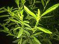 Plant at night.jpg
