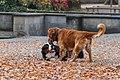 Playing dogs in Lindenhof.JPG