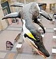 Pliosaurus in Bristol Museum.jpg
