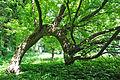 Plotytskyi-park-7004.jpg