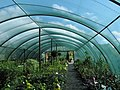Polytunnel, but with netting - geograph.org.uk - 1274787.jpg