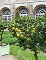 Pont-à-Mousson, Norbertine abbey, the cloister garden-2.jpg