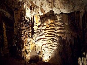 """From cave of """"Postojnska Jama"""" in Sl..."""