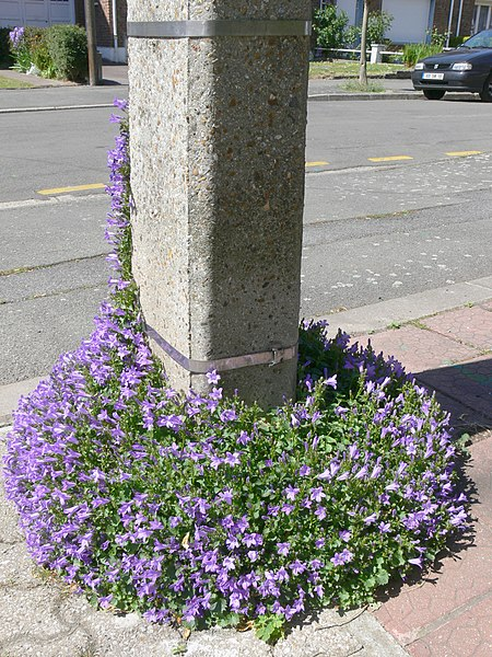 A telephone pole can be covered with ivy and play a role similar to that of urban trees, but this requires maintenance of its upper part. As a minimum, especially if made of concrete, the base can easily be vegetated.