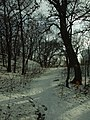 Praha, Smíchov, Skalka, zasněžený les.JPG