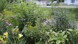 File:Prairie plants in Indiana.webm