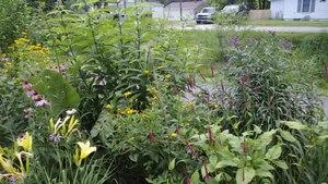 File:Prairie plants in Indiana.webm