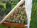 Priekopa - pestovanie kaktusov.JPG