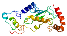 Protein UBE2D2 PDB 1ur6.png