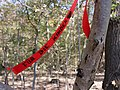 Protest banner in the Hambach forest 02.jpg