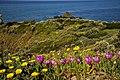 Punta Falcone 001.jpg