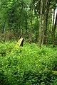 Puszcza białowieska fragmenty rezerwatu ścisłego a11.JPG
