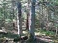 Puuslik 02 - panoramio.jpg