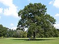 Queen Victoria's Oak Tree, Sandringham - geograph.org.uk - 44077.jpg