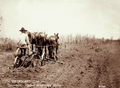 Queensland State Archives 5162 Crohamhurst ploughing for late crop of corn c 1899.png