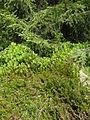 Réserve naturelle du Tanet-Gazon du Faing (5).JPG