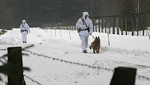 Belarus - Soldiers patrol in the Białowieża Forest on the Belarusian border with Poland.