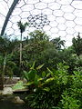 Rainforest Biome @ Eden Project (9757373426).jpg