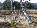 Ramsar Site Mires of Pass Thurn 12.jpg