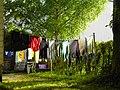Red Shorts - Flickr - erix.jpg