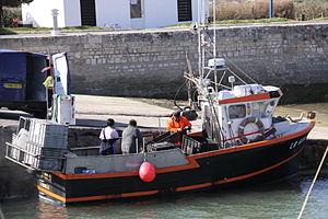 Retour de la pêche à la seiche du fileyeur Jason IV (1).JPG