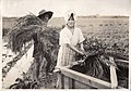 Rice Harvesting in Japan (1914 by Elstner Hilton).jpg