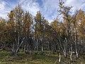 Ringebu Kvitfjell vest IMG 6564.jpg