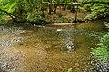 River Plym north of Plymbridge (5960).jpg