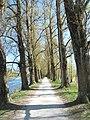 Riverside path - panoramio.jpg