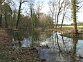 Rivière anglaise (Parc de Noisiel).jpg