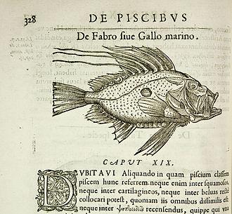Guillaume Rondelet - Extract from Rondelet's 1554 work De piscibus