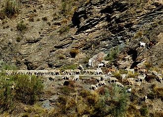 Alcazaba (Sierra Nevada) - Image: Roy Lindman Alcazaba Mountain Sierra Nevada Spain 002