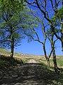 Rye Plantation - geograph.org.uk - 422104.jpg