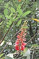 SZ 深圳 Shenzhen 蛇口 Shekou Nanshan 四海公園 Sihai Park green plant leaves red flower Oct 2017 IX1 01.jpg