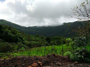 Safari- Tamhani Ghat-Farming.jpg