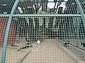 Safari Park Karachi (Zoo) - panoramio.jpg