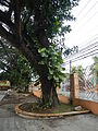 SanJuan,Batangasjf9354 15.JPG
