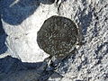 San Gorgonio Survey Marker.JPG