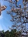 Sant'Edoardo in spring.jpg