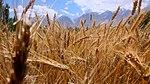 Satpara Irrigation Project (16294204657).jpg