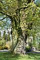 Schleswig-Holstein, Lutzhorn, Naturdenkmal 49-02 NIK 2932.JPG
