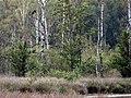 Schwarzstorch 081.jpg