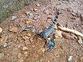 Scorpion (12).jpg