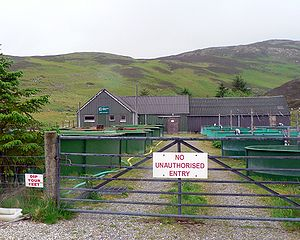 Aquaculture of salmonids - Assynt Salmon hatchery, near Inchnadamph in the Scottish Highlands.