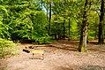 Scoutcentrum Buitenzorg Baarn - panoramio (19).jpg