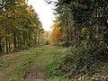 Scrat Haigh Wood Track - geograph.org.uk - 599321.jpg