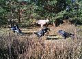 Seeadler im Naturpark Schlaubetal.jpg